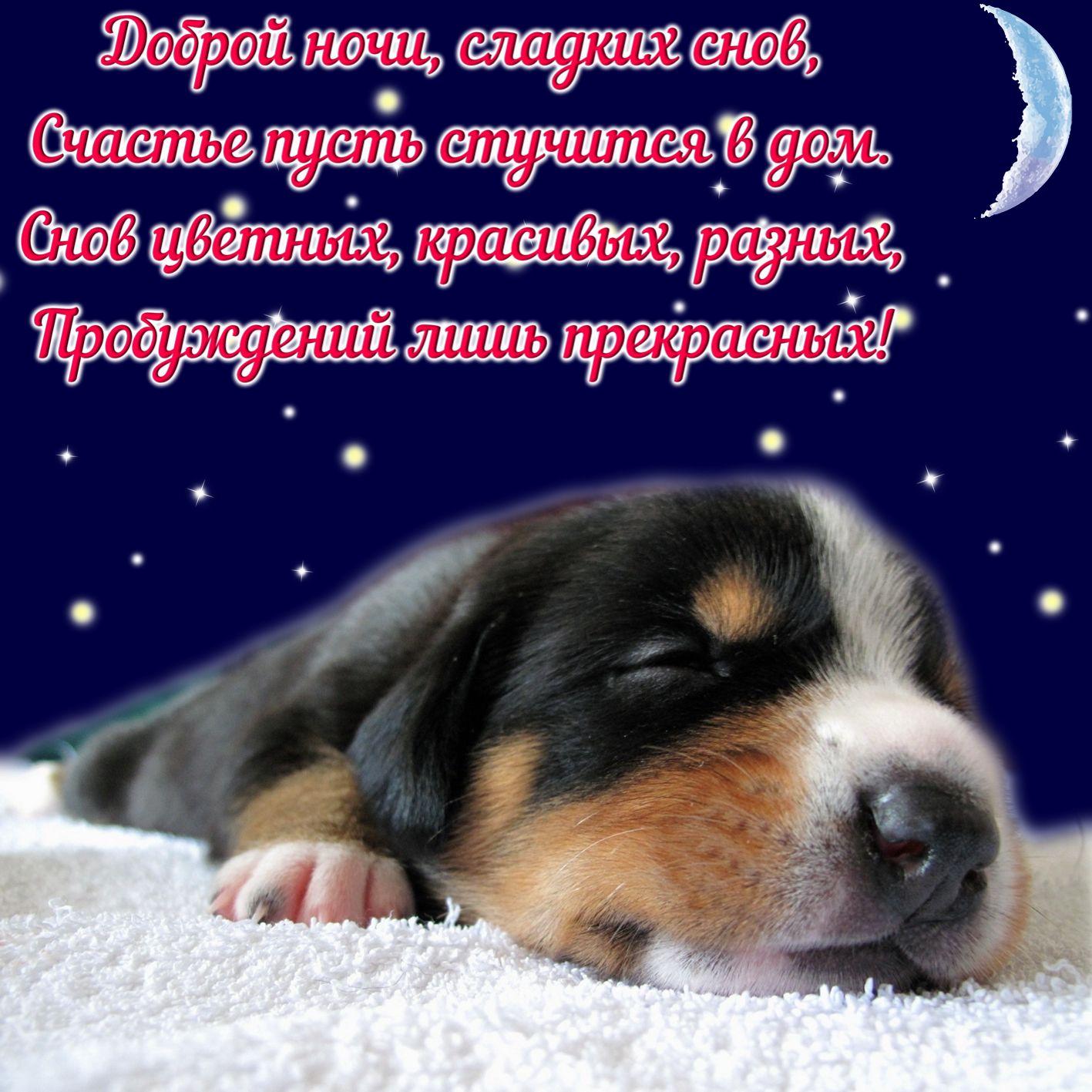 красивая открытка приятных снов изображения обязаны